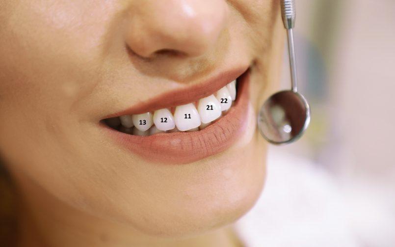 Cum și de ce se face numerotarea dinților în stomatologie?