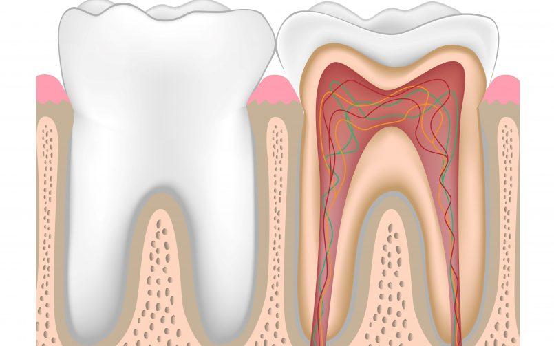 Denumirea dinților si structura acestora