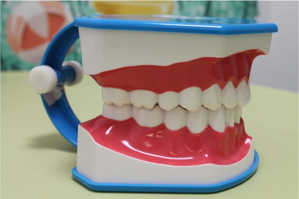 model dentar muscatura corecta a dintilor