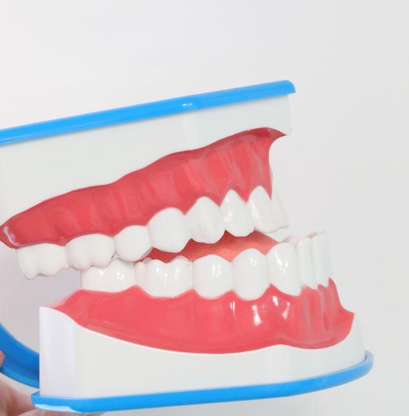 model dentar muscatura incorecta a dintilor